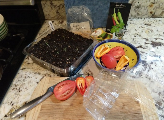"Picture shows gardening materials, including soil, seeds, sliced vegetables and repurposed plastic ""clamshell"" containers to use as pots."